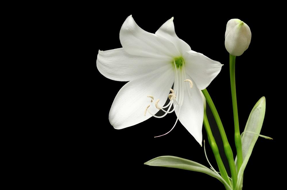 Top 20 Cele Mai Frumoase Flori Din Lume