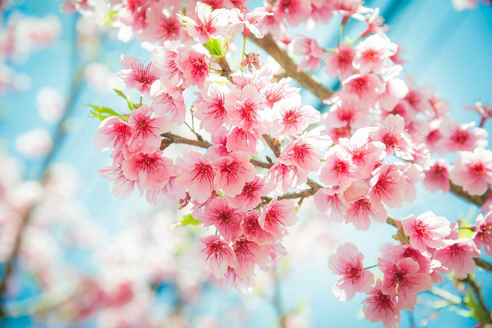 Mesajul Secret Al Florilor. Ce Urări De Florii Facem, Când Le Dăruim?