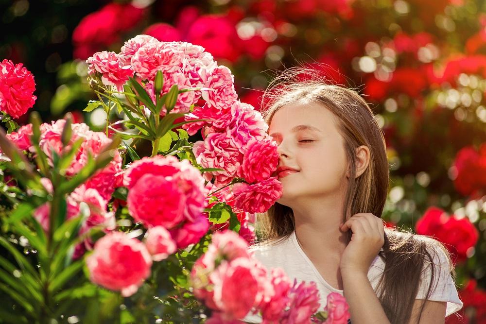 Cea Mai Mare Gradina De Trandafiri Din Romania