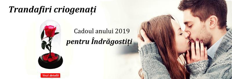 Trandafiri Criogenati – Cadoul Anului 2019 De Valentines Day