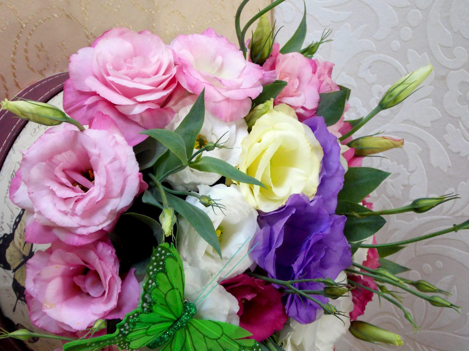 Lisianthus, O Floare Delicată în Producția Proprie.