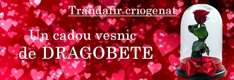 Trandafir Criogenat – Un Cadou Veşnic De Dragobete