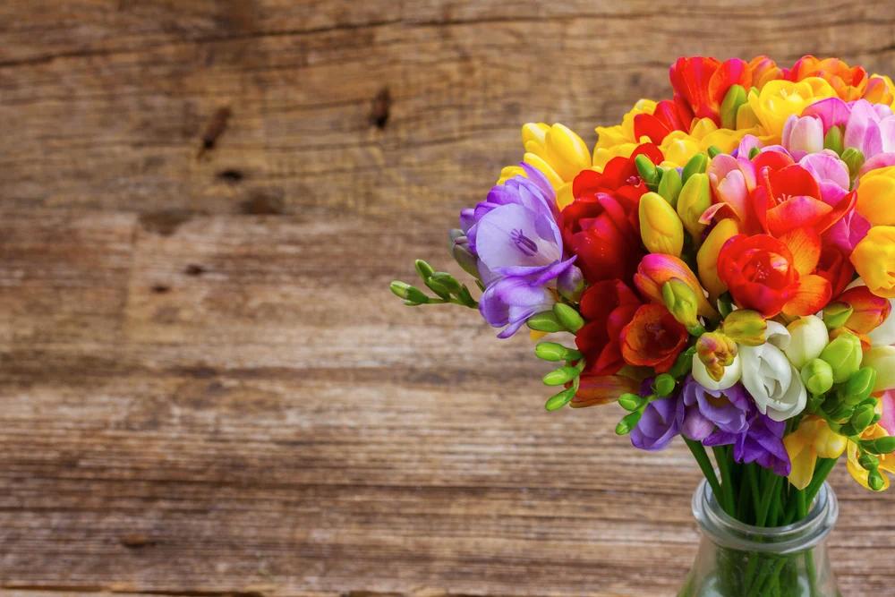 Frezia – Floarea Parfumată A Primăverii